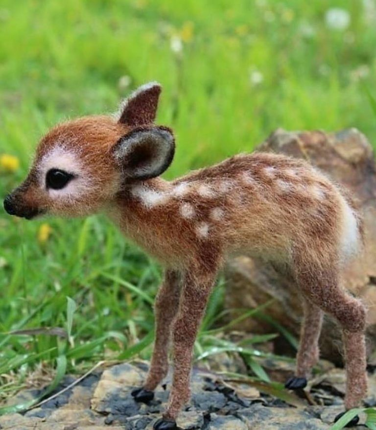 The 100 Cutest Animals Of All Time – List Inspire