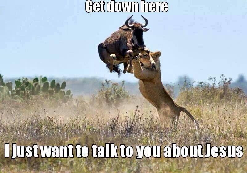 a7af4dc5acead62b379f36f5227e63d9 get down here animal memes pinterest animal, wild animals,Get Down Funny Meme