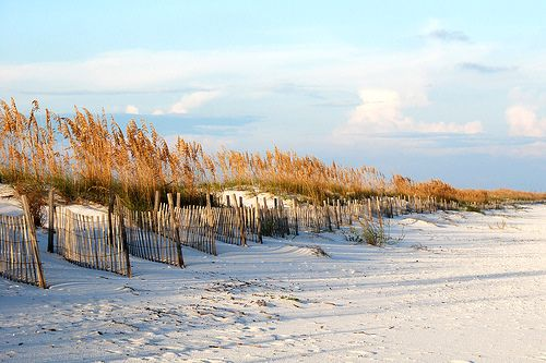 Gulf State Park  Gulf Shores, AL  I'm thinking about taking the kids camping here for Spring Break.
