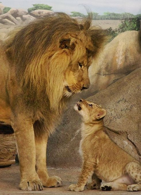 LEONES Father and Son