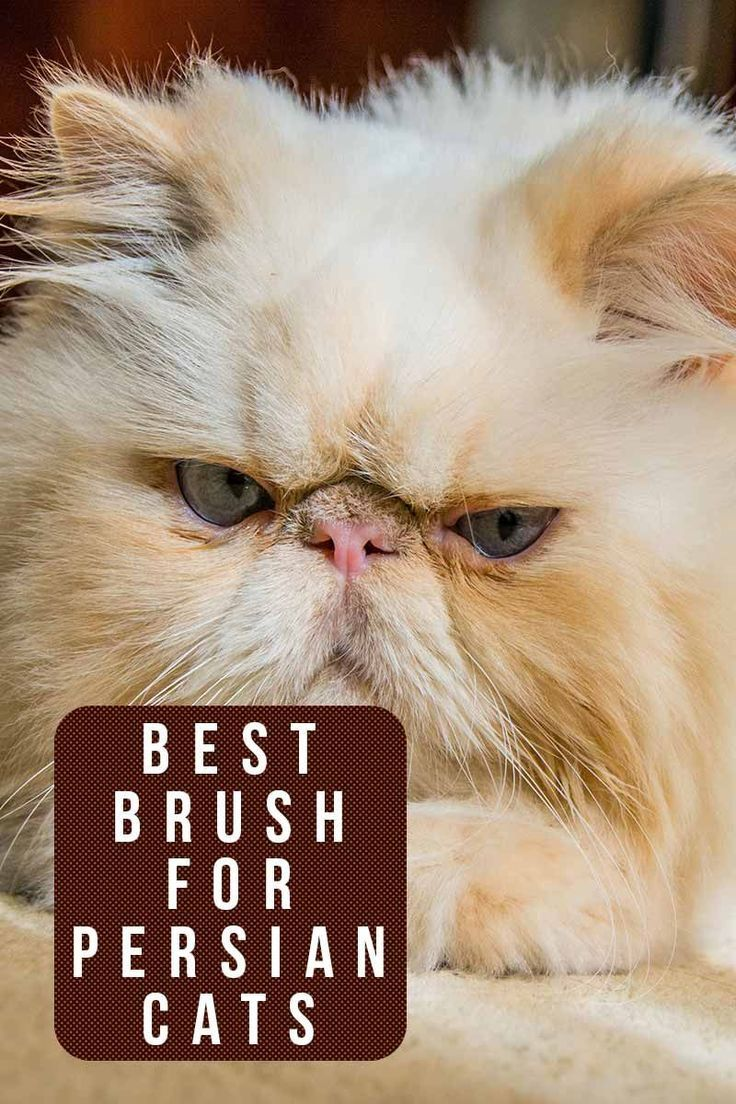 Best brush for Persian cats - Grooming products reviewed by TheHappyCateSite.com #catgroomingproducts