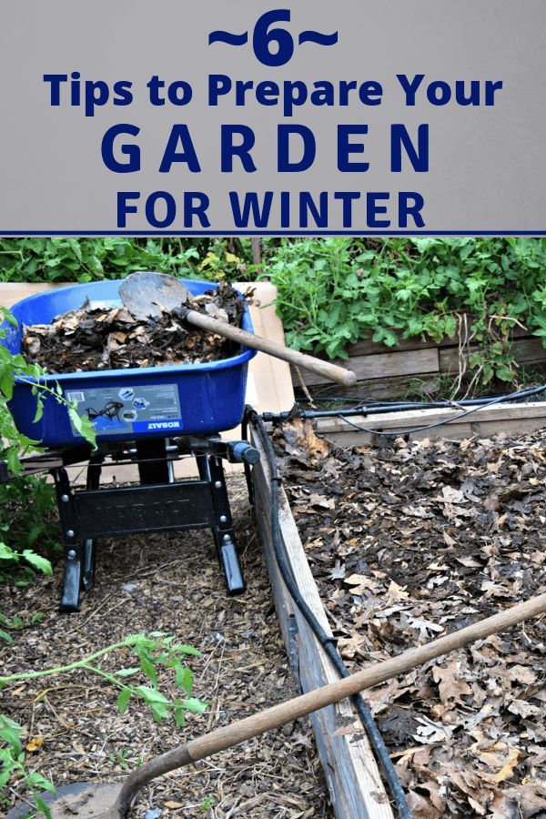 6 simple tips to prepare your garden for winter - Prepare vegetable garden for winter ...