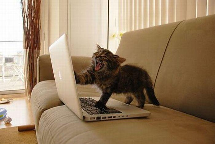 NOOOOOOOOOOO it haz crashed!!!!