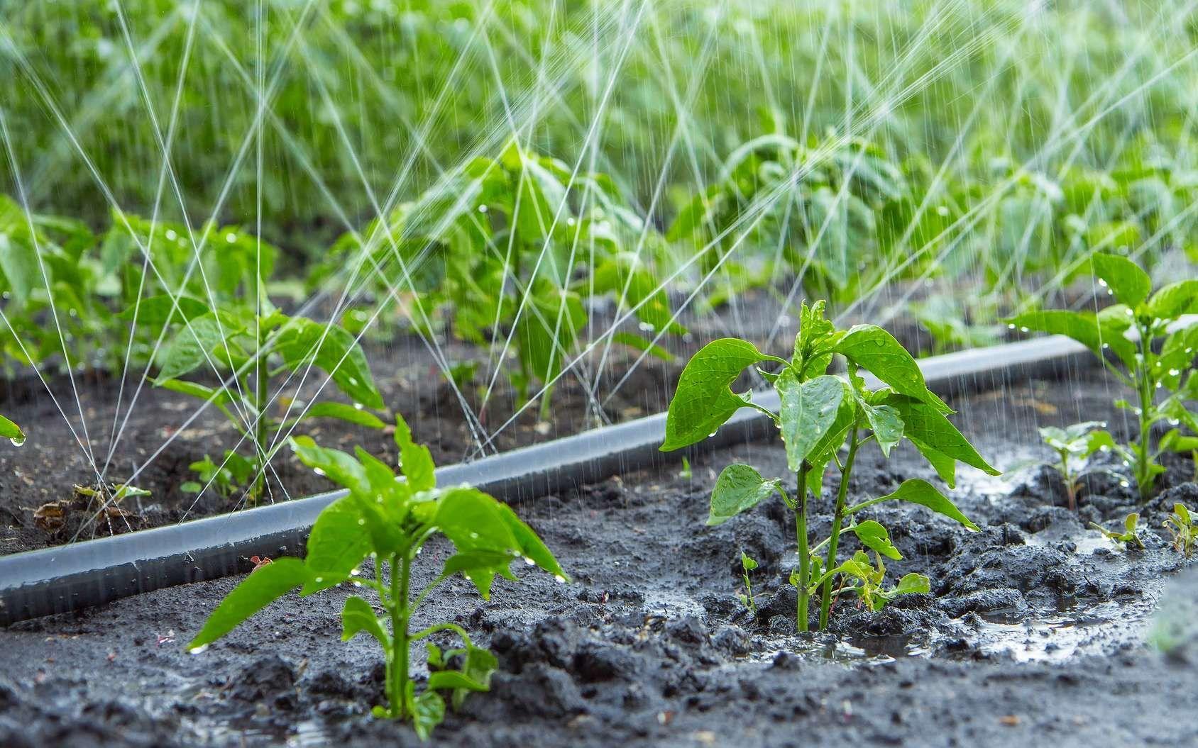 Comment Arroser Avec Un Tuyau Microporeux Jardin Ecologique