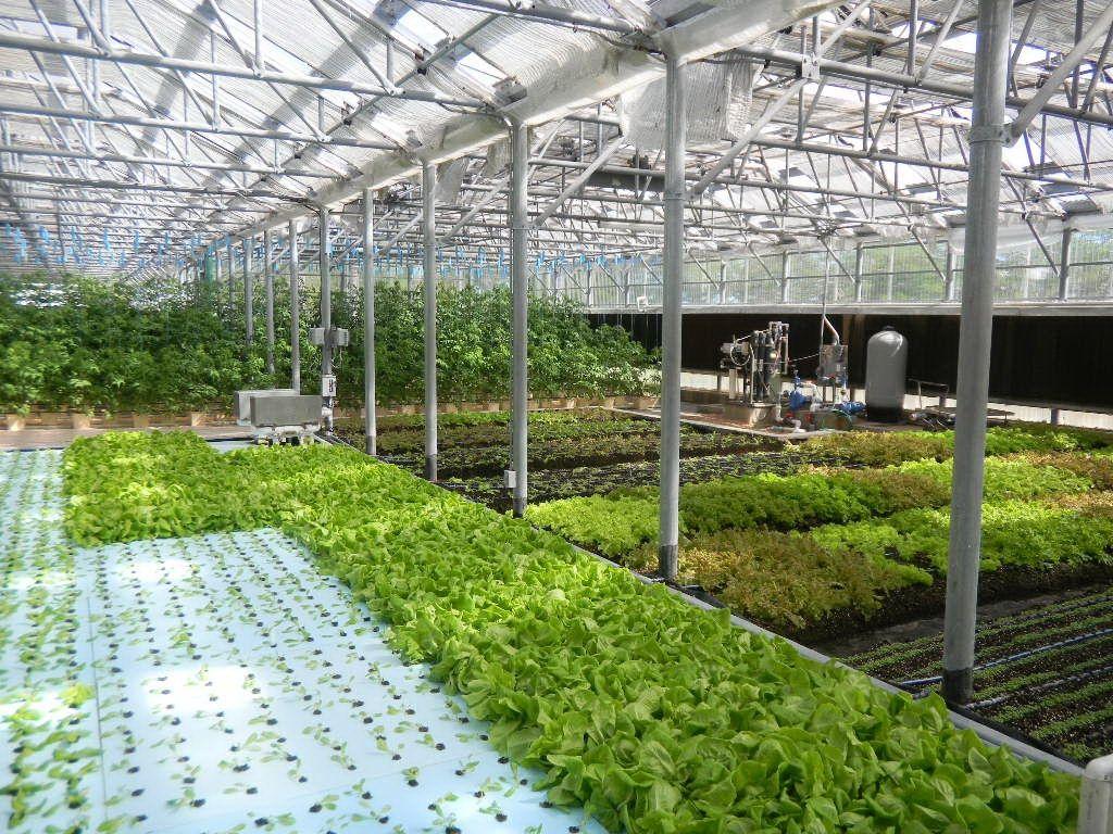 Commercial Greenhouse Manufacture Backyard Aquaponics 400 x 300