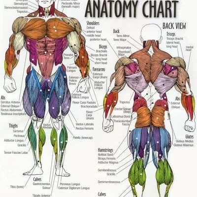 Anatomy and Physiology | biju | Pinterest | Human anatomy, Anatomy ...