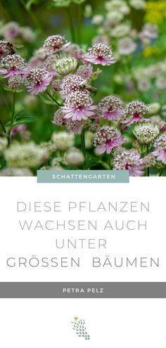 Waldgarten - Pflanzen die im Schatten wachsen - Stilvolles Design – einfach gepflanzt