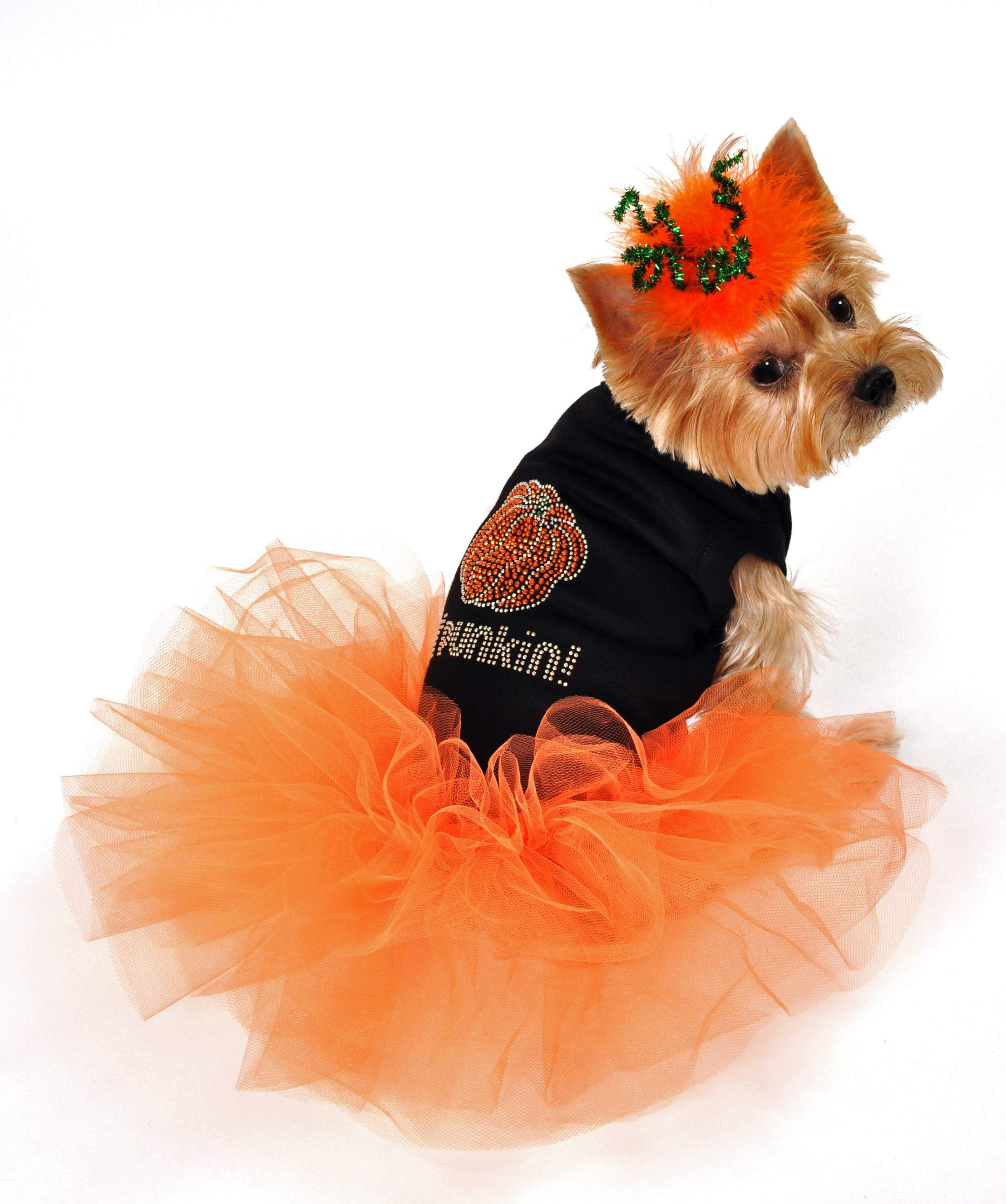 Sweet dog outfit for fall! (With images) Dog halloween