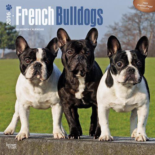 French Bulldogs Calendar 2016 $14.95