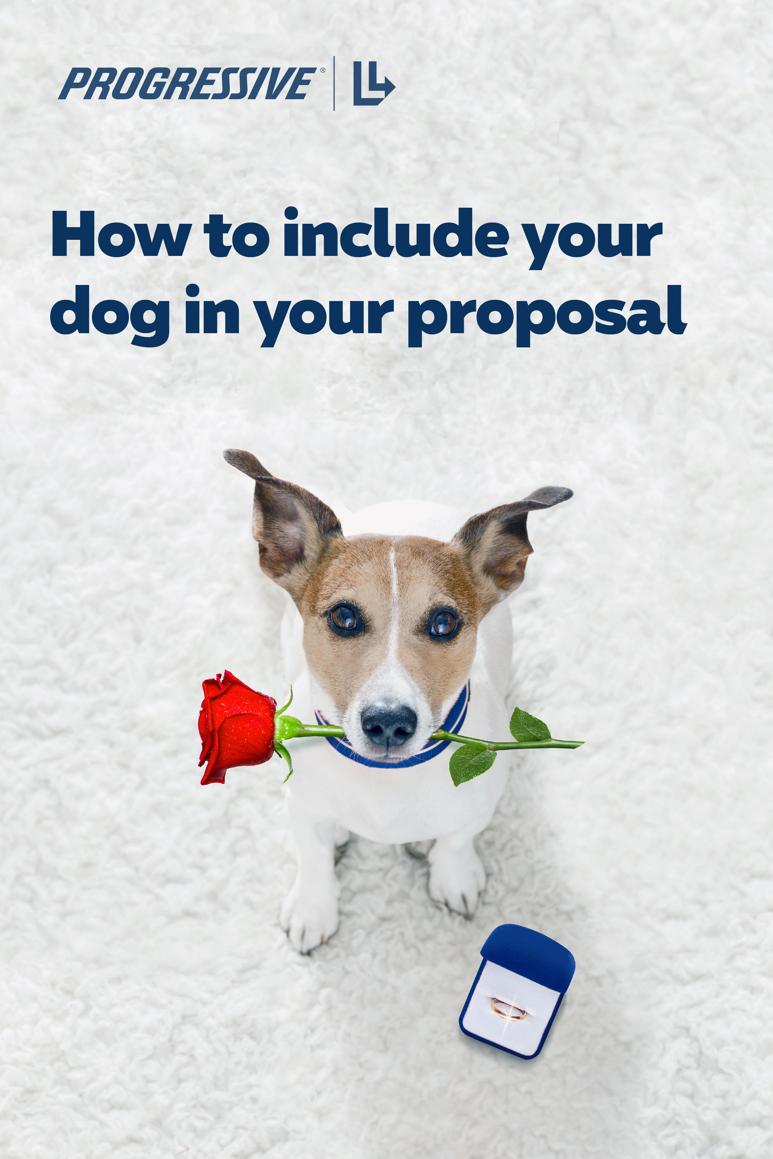 How to include your dog in your proposal in 2020 your