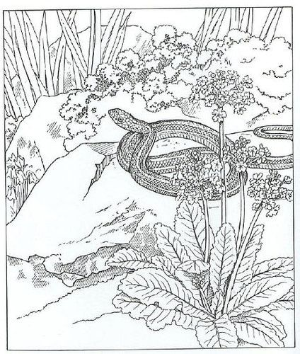 Animals On Coloring Pages Nature Mandala Coloring Books