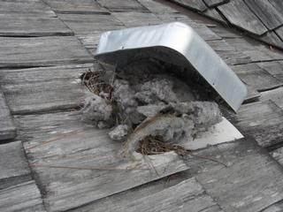 Clogged Roof Dryer Vent Clean Dryer Vent Dryer Vent Dryer Duct