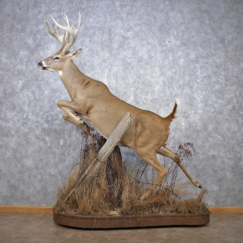 Amazing Deer Taxidermy Deer Taxidermy Life Size Mount