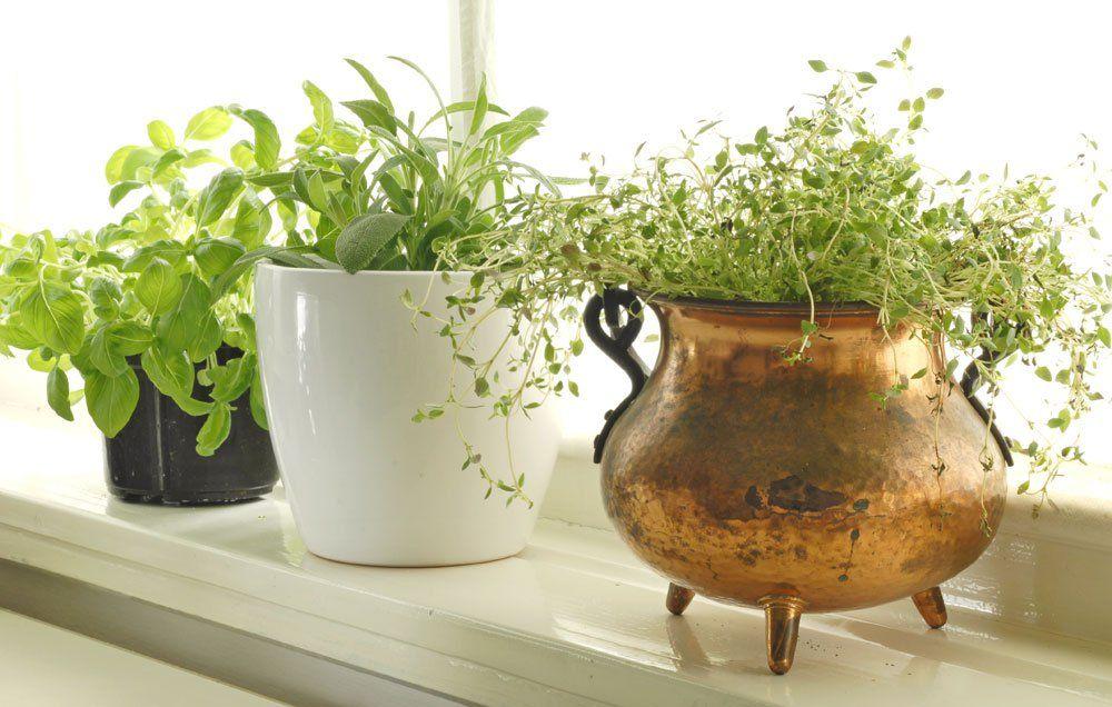 6 Absolute Easiest Herbs To Grow Indoors Growing Herbs 400 x 300