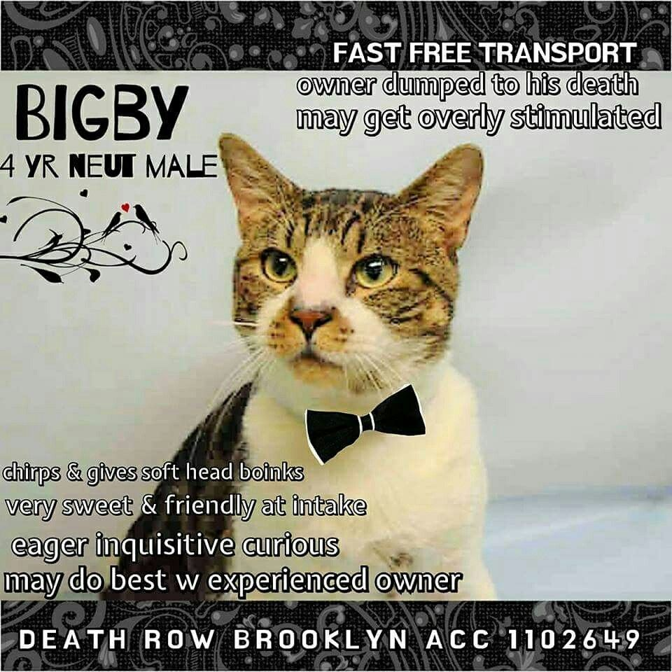 4/14/17TO BE DESTROYED TODAY BY NYC ACC FRIDAY 4/14/17