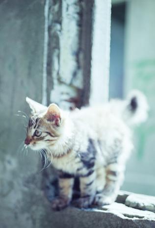 Little Kitties おしゃれまとめの人気アイデア Pinterest Dana Fisher かわいい猫 子猫 キュートな猫