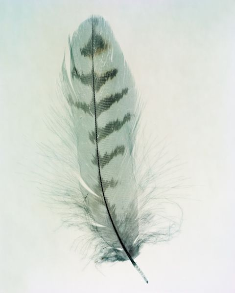 Feathers - Taylor Curry