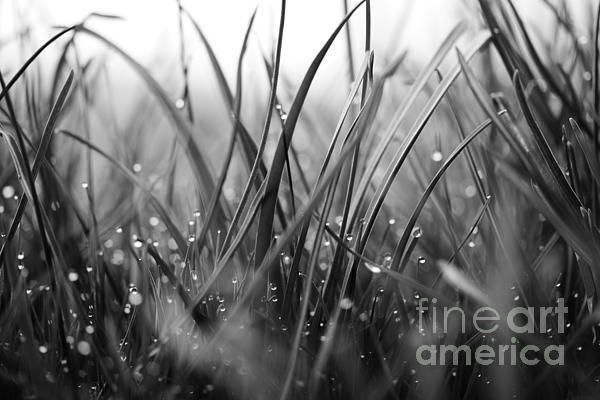 Secret Treasure, black and white macro of morning dew on grass.