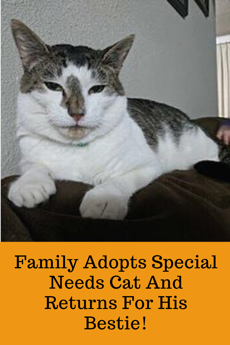 Family Adopts Special Needs Cat And Returns For His Bestie