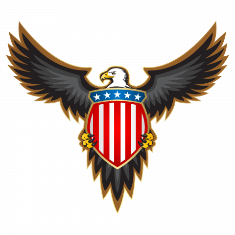 eagle hawk kite bird png image with transparent background