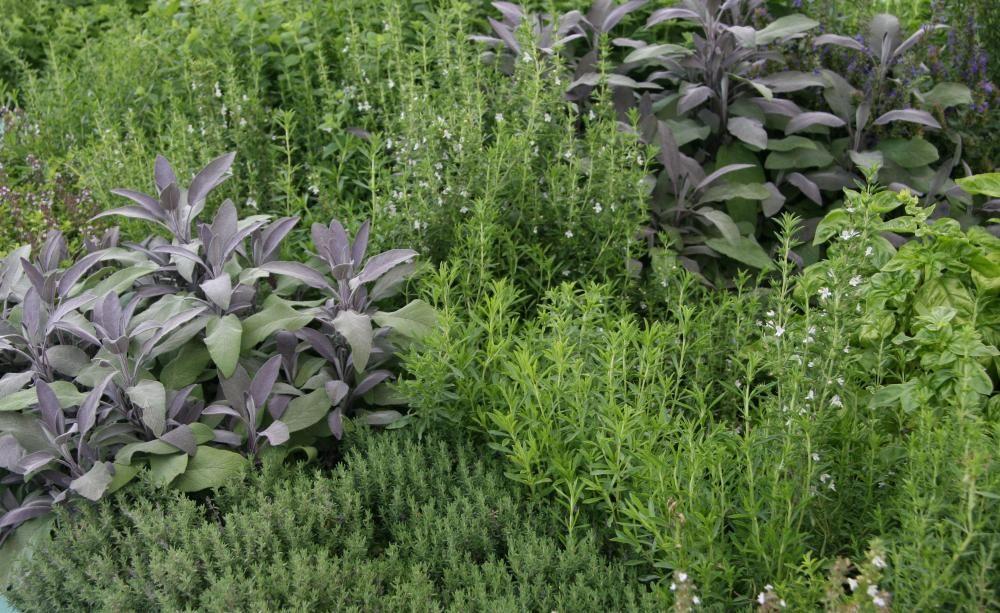 Fabulous Frische W rze aus dem Garten Ein Kr uterbeet anlegen Ob Minze Thymian oder Rosmarin Gesunde W rze aus dem eigenen Garten bereichert die K che ungemein