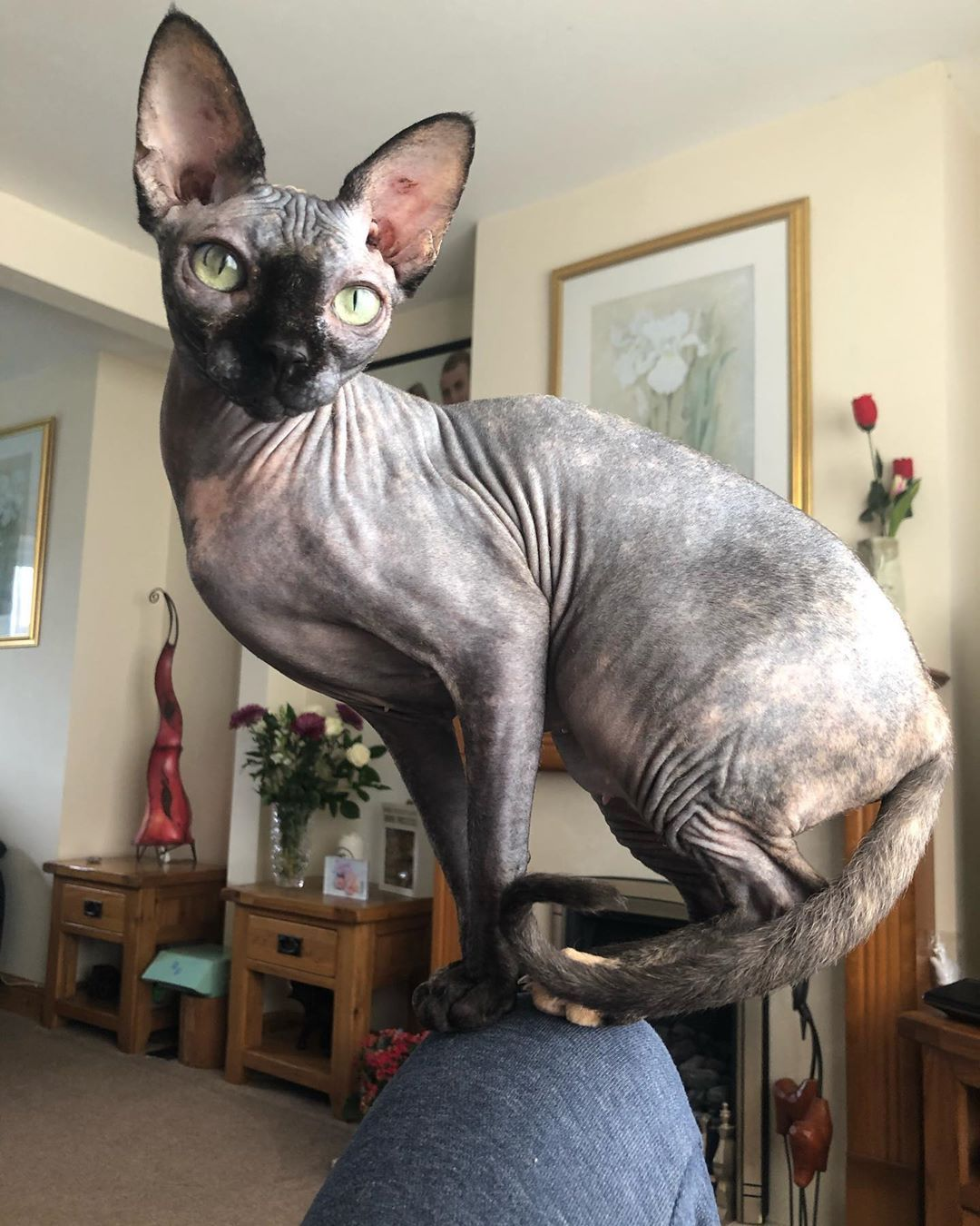 I M The Queen Of The Castle And Your Bestmeow Castle Catloversclub Catoftheday Cats Of World Catsofinstagram Excellent Kittens Hairless Catstagram Di 2020