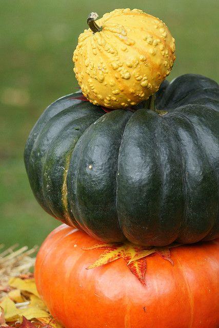 Pumpkins ~ hotes trinkets