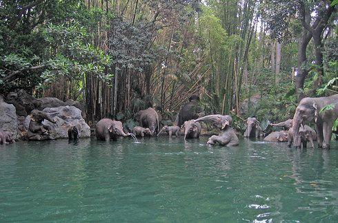 The elephant bathing pool scene.   13 Behind-The-Scenes Photos Of Classic Disneyland Rides