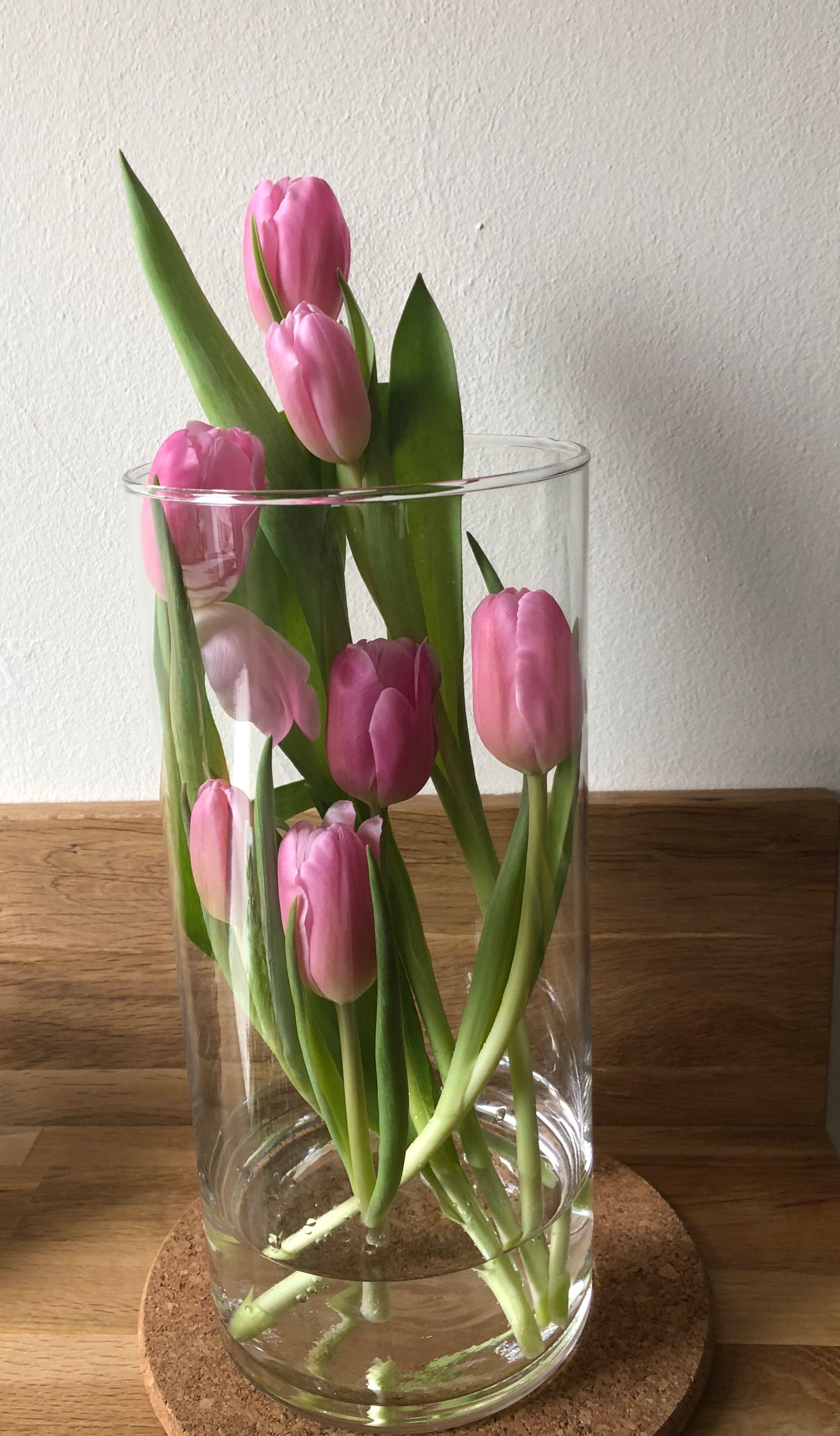 Der Fruhling Kommt Ins Wohnzimmer Tulpen In Der Glasvase Mal Ein Bisschen Anders Glasvase Tulpen Tulpen In Vase