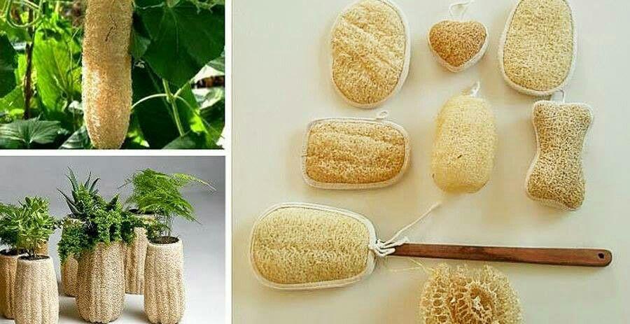 Estropajos decoracion pinterest ba o cabello y belleza for Productos para el bano