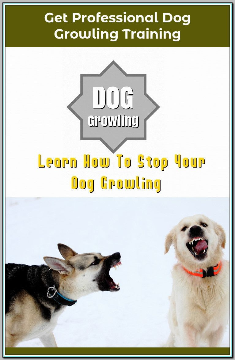 Ways Of Stopping Your Dog From Growling Dog Growling Dogs Dog
