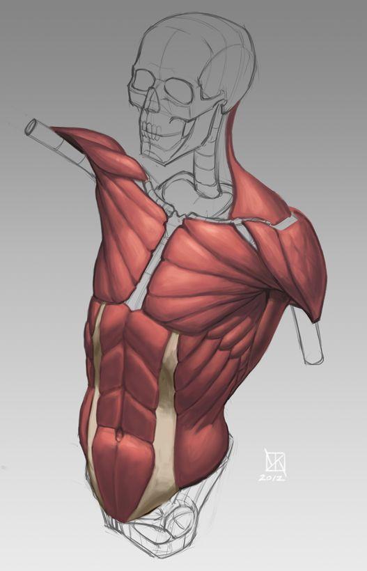 http://kylekane.com/anatomy/anatomy.html | Tutorials | Pinterest ...
