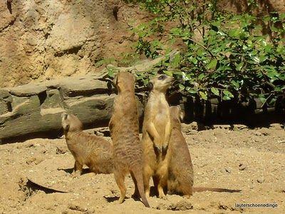 Bastelfee´s Bilderbuch: Duisburger Zoo