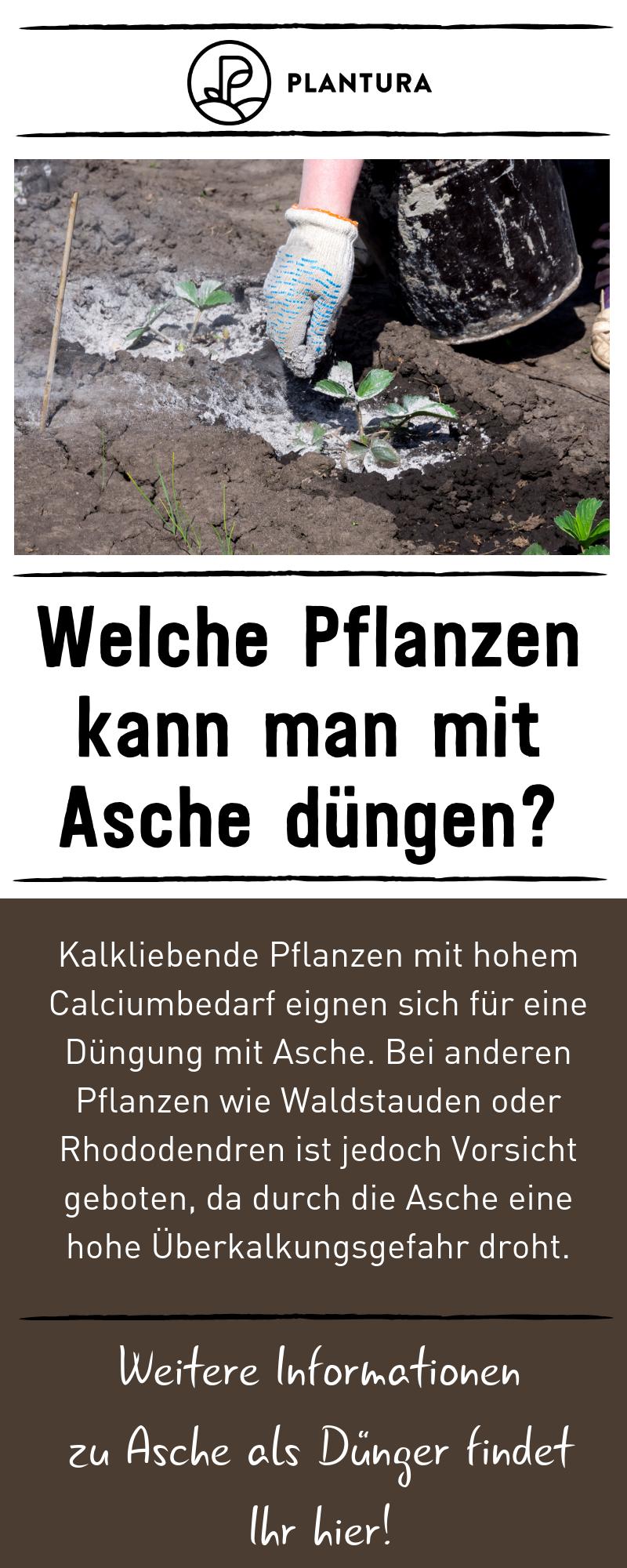 Asche Als Dunger Anwendung Von Holzasche Im Garten Pflanzen Asche Als Dunger Garten Neu Anlegen