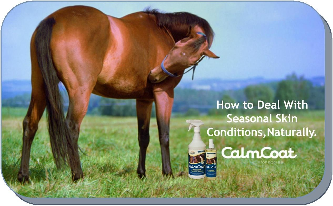 Dealing With Seasonal Horse Skin Conditions Naturally Skin Conditions Horse Care Tips Horses