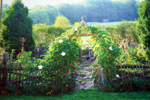 bean arch leading into fenced vegetable plot
