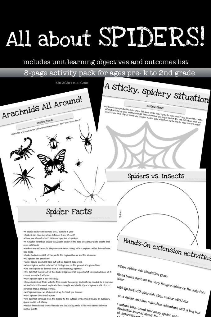 All About Spiders Learning & Activity Printable Pack (With ...