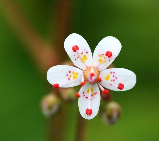 [I} {color de flores ladrón]