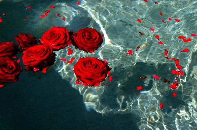 red roses tumblr wallpaper widescreen and wallpapers full