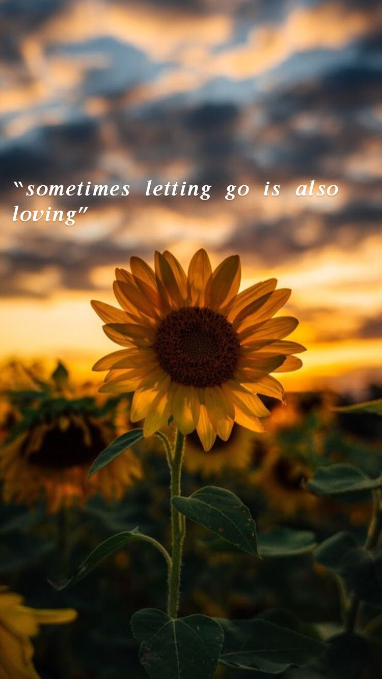 Pin By Oumima Alaoui On Sunflower Quotes Inspirational Quotes Wallpapers Flower Quotes