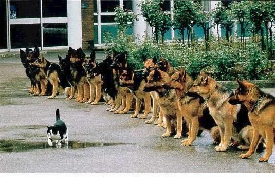 OĞUZ TOPOĞLU : cesaret bu olsa gerek k9' köpekler ve komutan kedi...