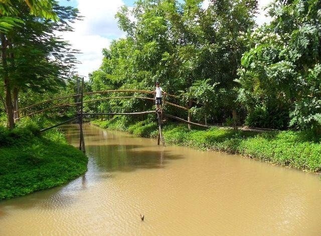 Cầu Khỉ Trong đời Sống Của Song Nước Miền Tay ảnh 5 Du Lịch đời Sống đồng Que Nước