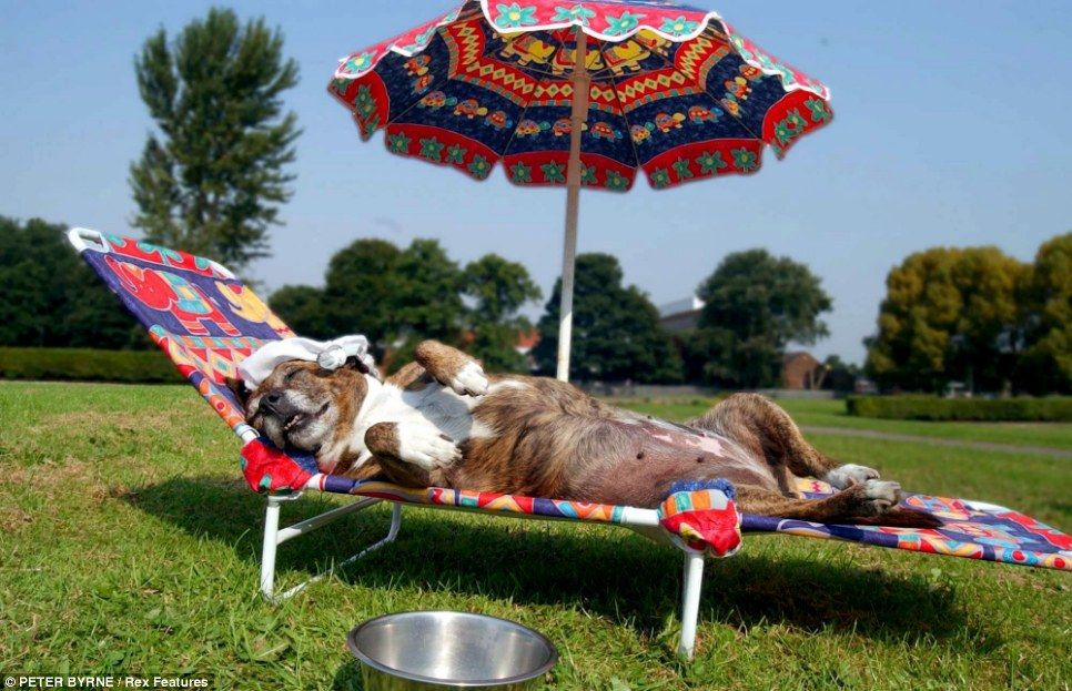 Let sleeping dogs lie: Tara the dog opts for a sunbed and parasol to see her through the blistering heat in Britain