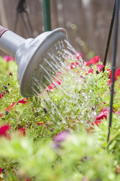 How To Fertilize Hanging Baskets To Keep Them Flowering