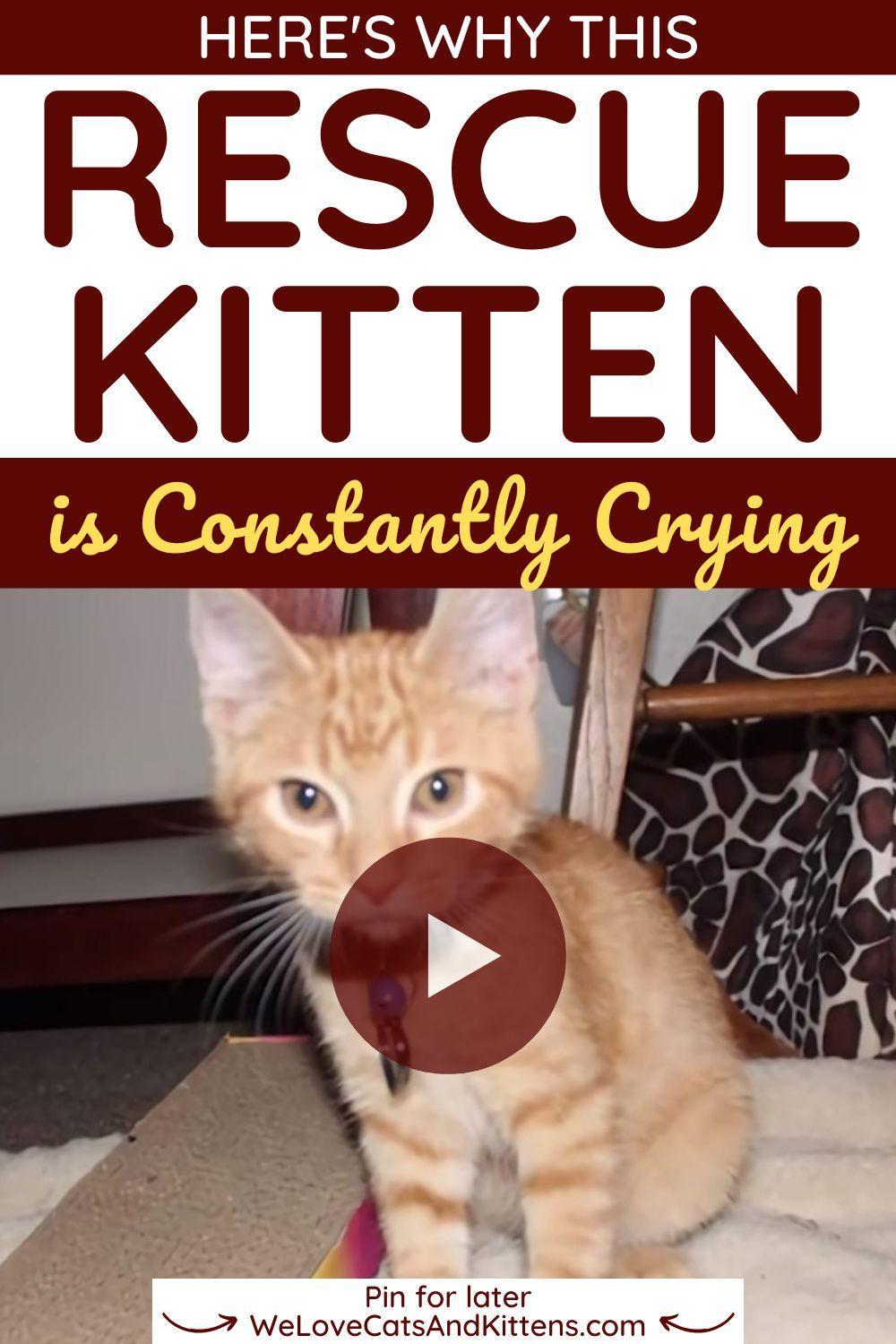 This Rescue Kitten Was Constantly Crying Then His Owner Realized He Was Trying To Say Something We Love Cats And Kittens In 2020 Kitten Rescue Cat Gif Cats