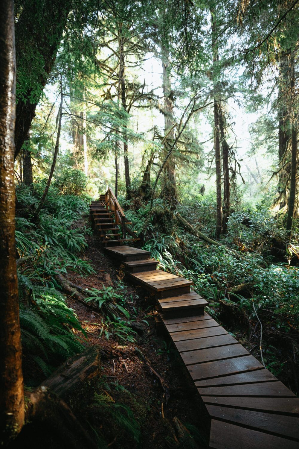 Discover the best things to do in Pacific Rim National Park with our complete guide! We're sharing the best hiking trails, Tofino beaches, and more on Vancouver Island right here! #canada #vancouverisland #PacificRim #britishcolumbia #lake #sunrise #travel #westernUSA #photography #landscape #PacificRimNationalPark #rainforest