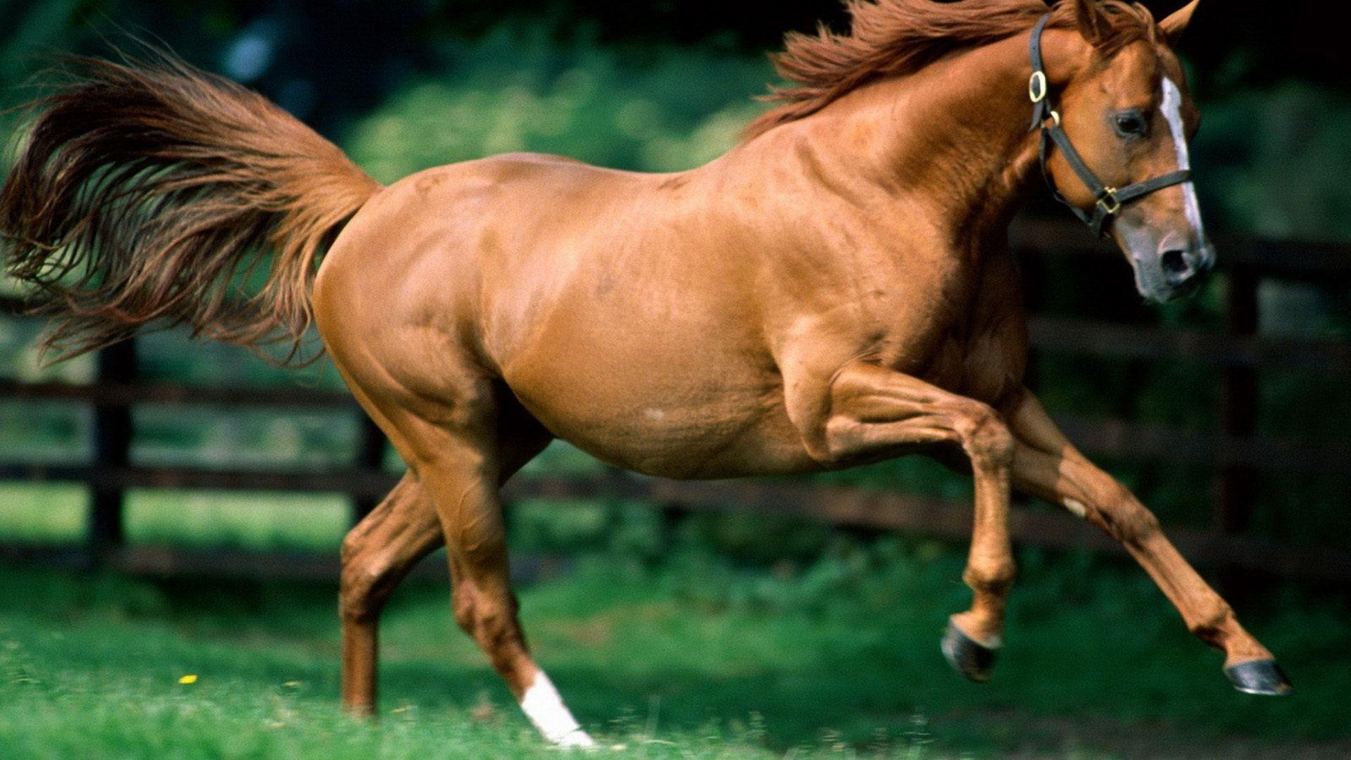 Simple Wallpaper Horse Flicka - a7bd81875c63cb879d8783be95c09305  Pictures_488160.jpg