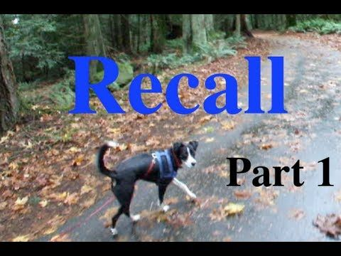 Shaping A Dog S Recall Part 1 Capturing A Check In Eye Contact