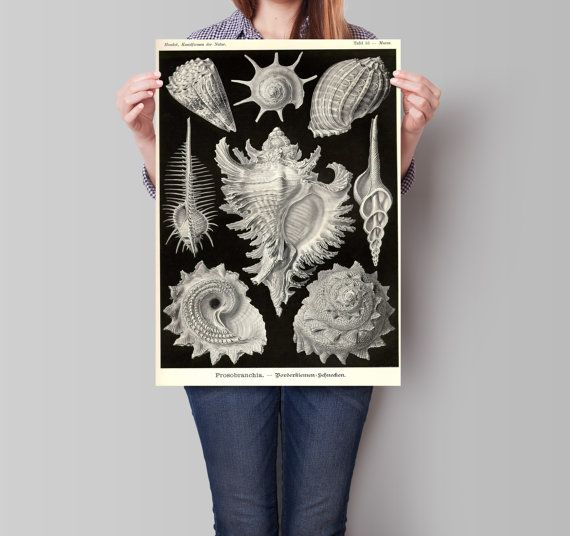 Shell print poster. Nautical illustration. Sea by ariadnathread