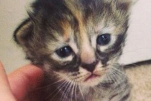 Too cute ! PICTURE: Move Over Grumpy Cat, 'Purrmanently Sad Kitten' Is In Town